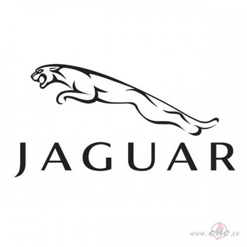 Jaguar foto attēls