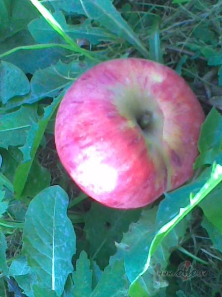 Ābolu uzglabāšana foto
