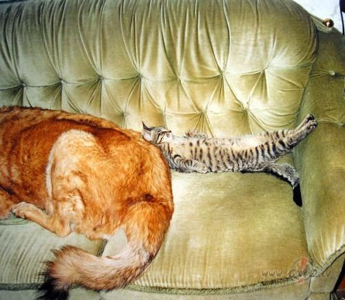 Kā likvidēt kaķa urīna smaku? foto