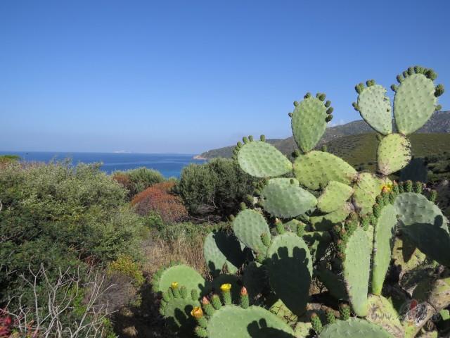 Kaktusi Sardīnijā