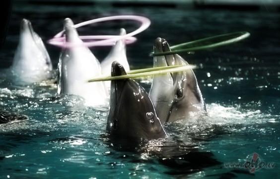 Klaipēdas delfinārijs
