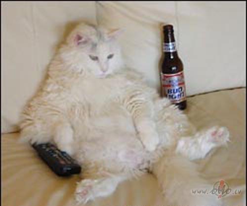 Kad kaķis paliek pieaudzis? foto