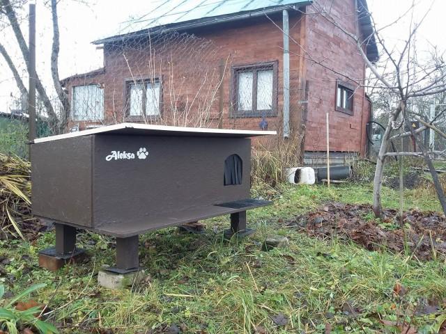 Vai Rīgā var uzlikt sodu īrniekam par savvaļas kaķu barošanu? foto