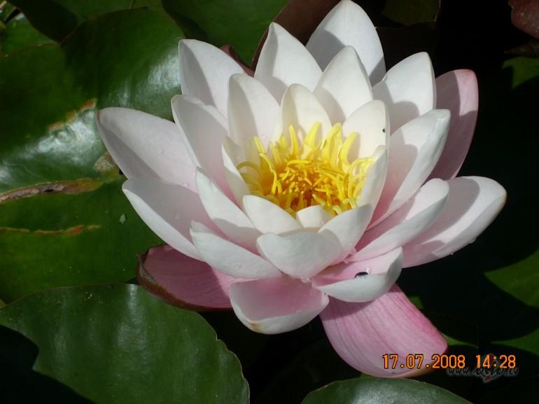 Kādi ir Tavi mīļākie ziedi? foto